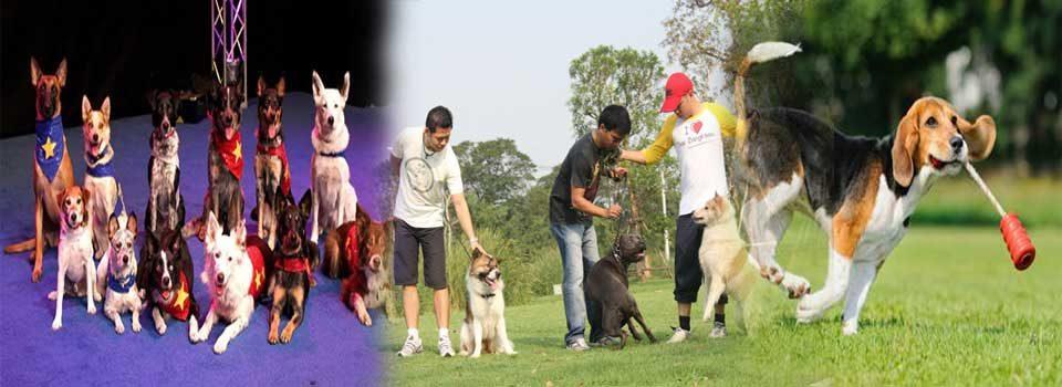 เว็บไซต์ความรู้เกี่ยวกับการฝึกสุนัข แสดงโชว์สุนัข