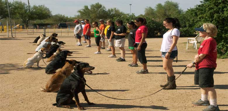 training-dog