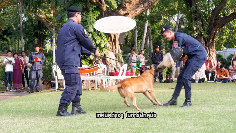 dogsix