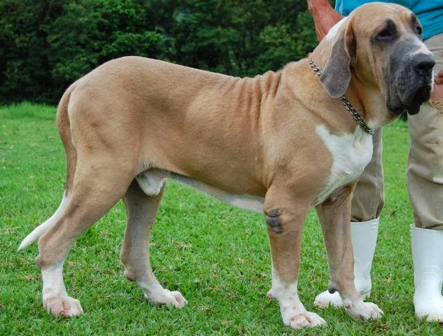 การฝึกสุนัขพันธุ์ดุอย่างไรให้เชื่อฟังเรา